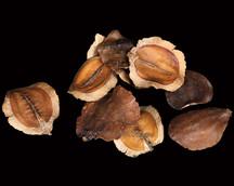 Jackaranda Splitted Natural