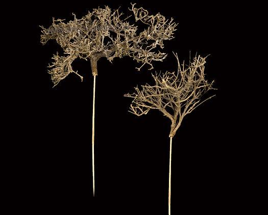 Dry Tree on Bamboo Stem