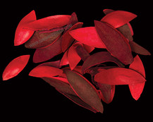 Lily Petal Red