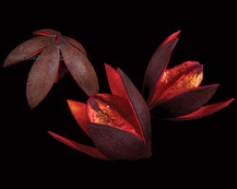 Lily Red