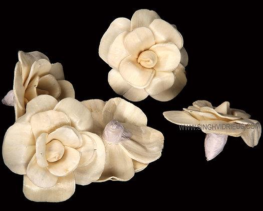 Sola Pitonia Flower