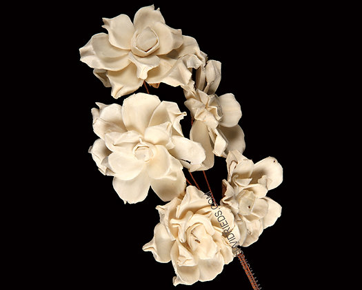 Sola Pea Rose on Wire