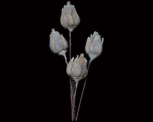 Arti Pod 12 Petals Golden Mushroom Base White Wash Flower
