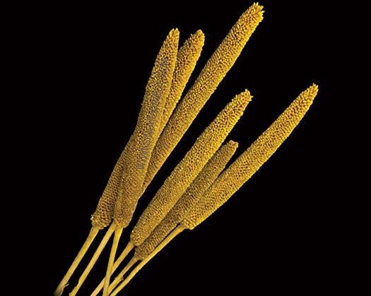 Babala Yellow