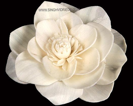 Sola Caspia Flower