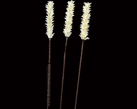Mustard Pine Stick Bleach