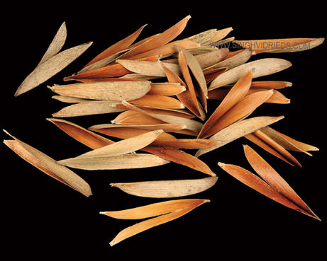 Scissors Leaf Natural