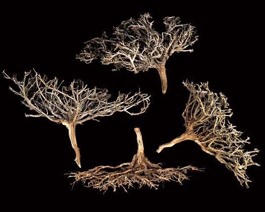 Dry Tree Natural