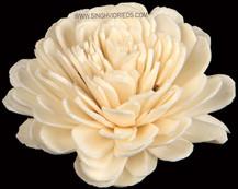 Sola Bela Flower