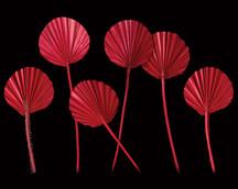 Palm Spear Round Red