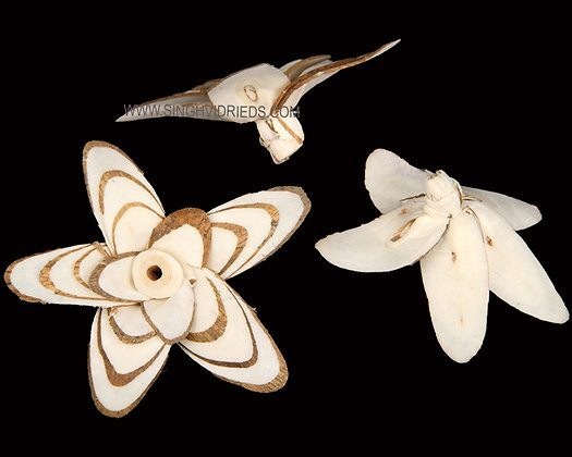 Sola Butterfly Flower