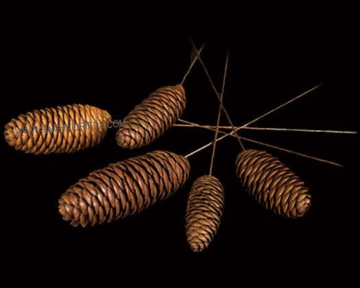 Rai Cone on Wire Stem