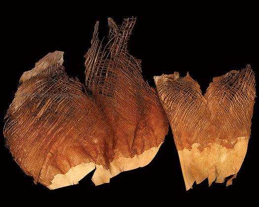 Palm Net Natural