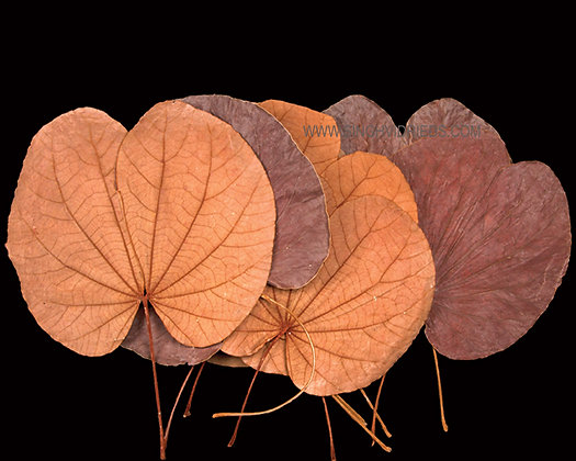 Folded Leaf Natural