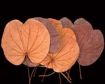 Folded Leaf Natural