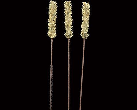 Mustard Pine Stick Natural