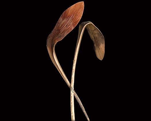 Shoe Horn Long Stem Natural