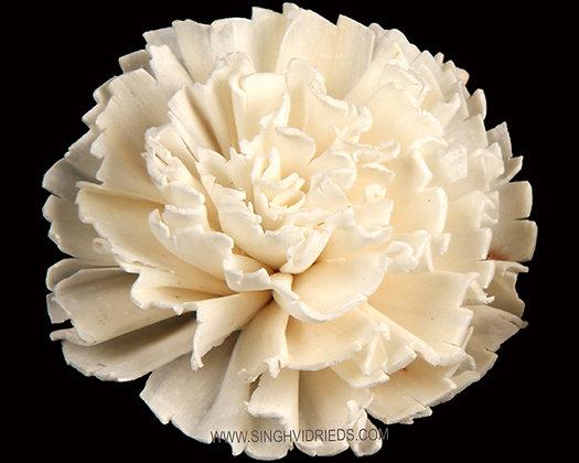 Sola Cut Carnation Flower