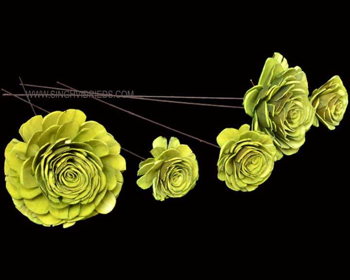 Sola Skin Beauty Rose on WST Lime.jpg
