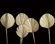 Palm Spear Round Natural