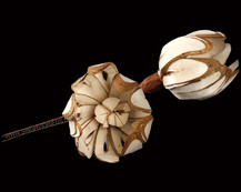 Sola Chip Flower with Skin on Wire