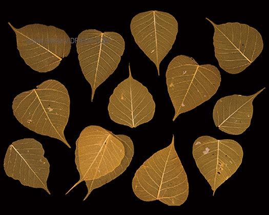 Pipul Leaf Skeleton Orange