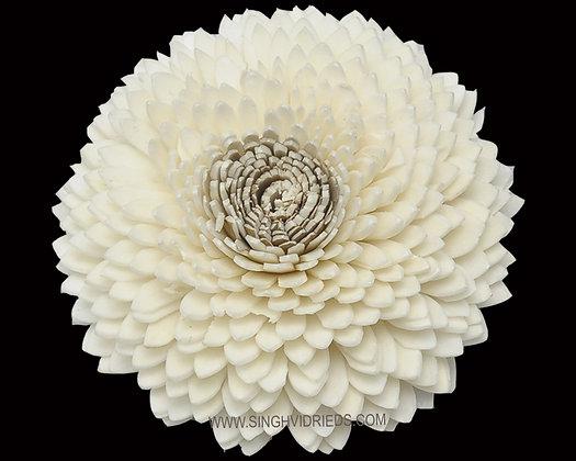 Sola Bellary Flower