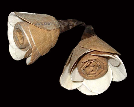 Sola Skin Rose