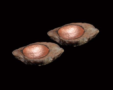 Coconut Half Inside Copper