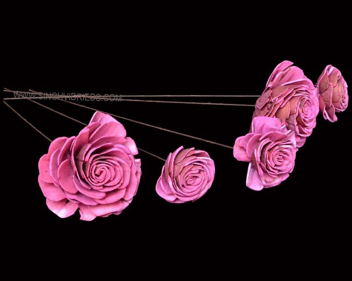 Sola Skin Beauty Rose on WST Rose Pink.j