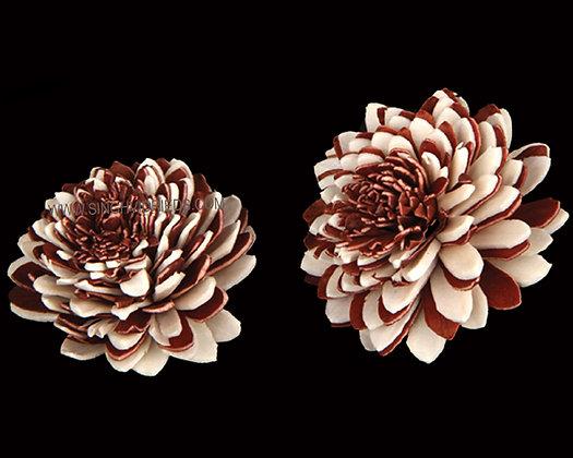 Sola Zinia Flower Bordo & White