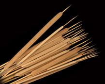 Reed Spadix Natural