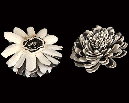 Sola Zinia Flower Black & White