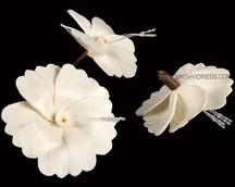 Sola Hibiscus Flower
