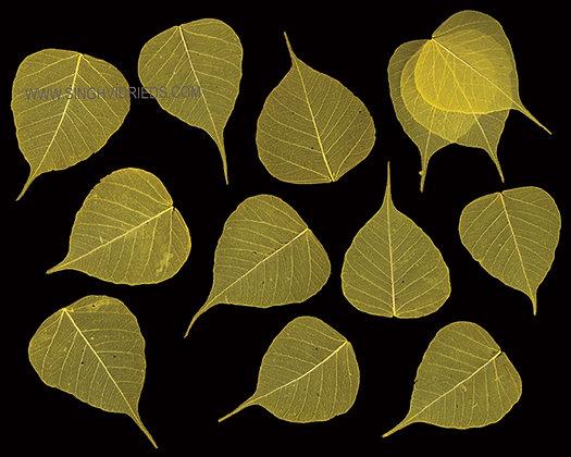 Pipul Leaf Skeleton Yellow