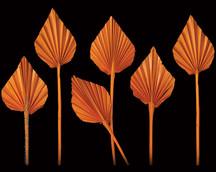 Palm Spear Orange