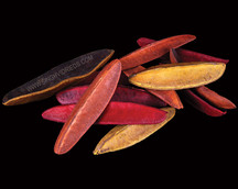 Aster Triangle Bean Mix Colours
