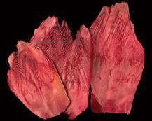 Palm Net Red