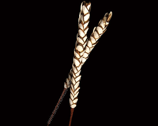 Sola Pine Stick