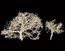 Dry Tree Bleach
