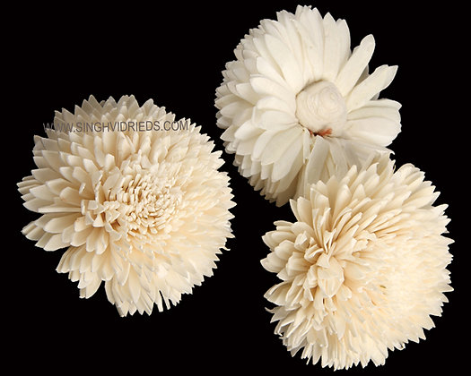 Sola Zinia Flower