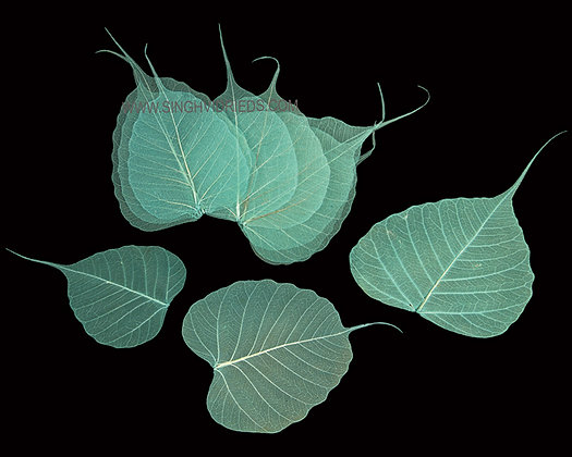Pipul Leaf Skeleton Teal