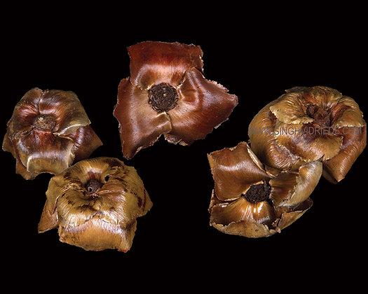 Palm Cap Lacquer