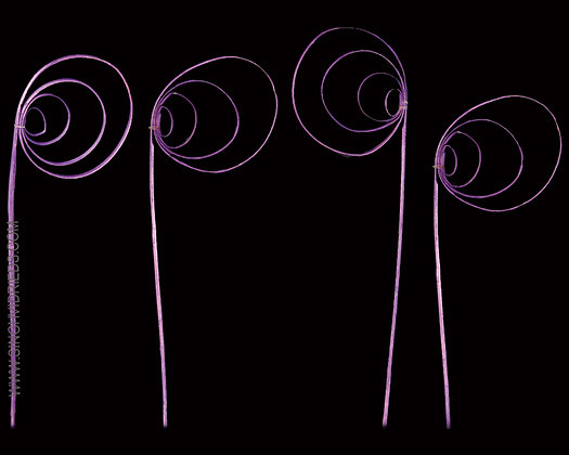 Cane Circle Violet