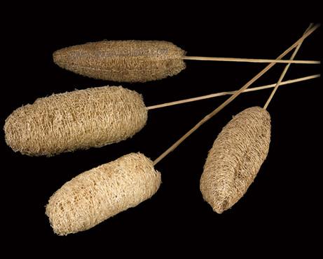Luffa on Bamboo Stem