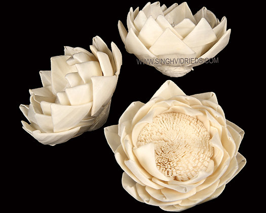 Sola China Lotus Flower