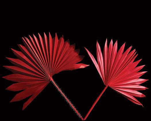 Palm Sun Cut Red