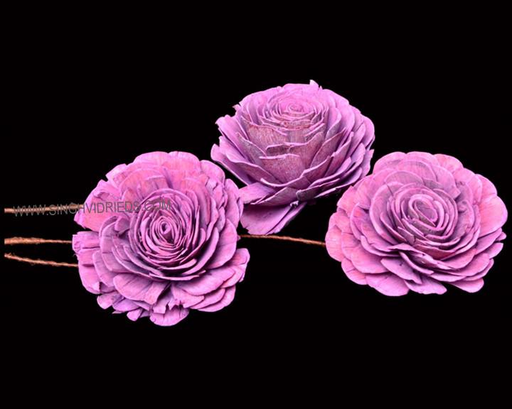 Sola Skin Beauty Rose TST Antique Two Tone Bright Erika