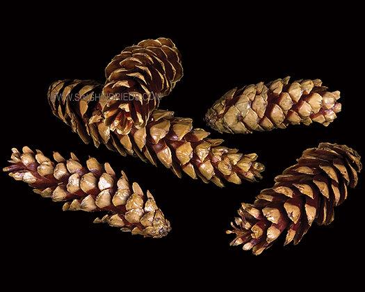Strobus Lacquer