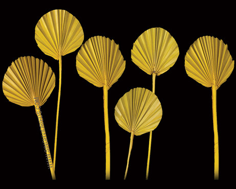 Palm Spear Round Yellow